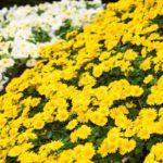 供花とは?献花や仏花との違い、手配方法や金額相場、芳名名札の書き方とマナーについて徹底解説!