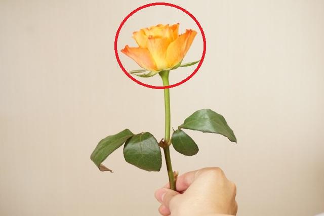 flower-ichirin
