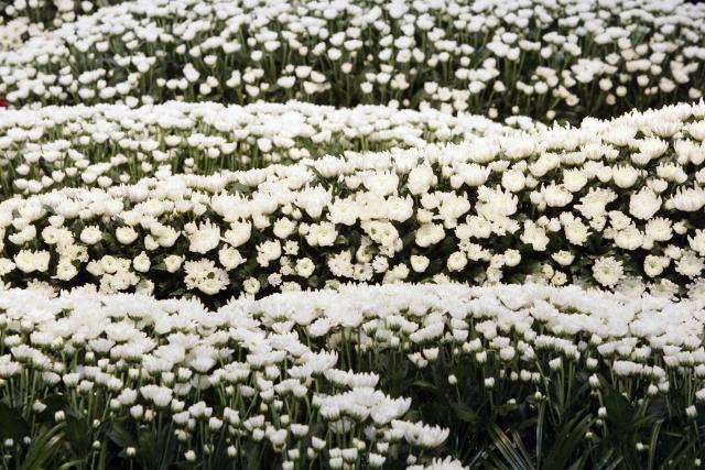 flower-image
