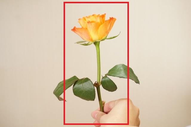 flower-ippon